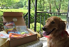 Paw Pals with Annie is not your average dog subscription box. Each box of premium dog products can be personalized, and does not auto renew!