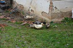 Village Ljutice in Serbia, real household in Serbian house