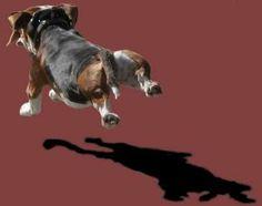 Basset artesien normand photo | The Three Turnip's: Basset Artesién Normand Dogs, Movie Posters, Animals, Art, Normandy, Art Background, Film Poster, Animaux, Doggies