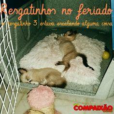 Lindos Filhotinhos. Logo estarão disponíveis a adoção. Quando estiverem castrados,vacinado e vermifugados. Manaus-Am