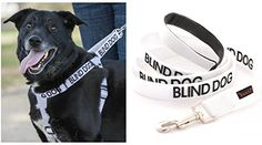 Special Offers - BLIND DOG Color Coded White Non-pull Dog Harness & 4 Foot Leash Set (No/Limited Sight) PREVENTS Accidents By Warning Others of Your Dog in Advance! - In stock & Free Shipping. You can save more money! Check It (March 31 2016 at 11:20PM) >> http://dogcollarusa.net/blind-dog-color-coded-white-non-pull-dog-harness-4-foot-leash-set-nolimited-sight-prevents-accidents-by-warning-others-of-your-dog-in-advance/