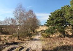 Edward Griffiths enjoys an easy stroll on an ancient heath in East Dorset which is frequented by buzzards and flights of curlews Wimborne Minster, The Holt, Holly Tree, Forest View, Animal Species, Rare Plants, Nature Reserve, Public Transport, Habitats