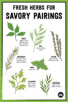Fresh Herbs are perfect for pairing with savory flavors! Try basil, dill, thyme, rosemary, mint, tarragon or cilantro in your favorite dishes.