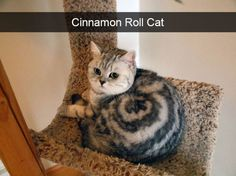 Zoes Snapchat X Zoe Pinterest Snapchat - 26 hilarious cat snapchats that need to be treasured forever