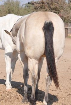 Ranch! Winchester Shotgun, Horses For Sale, Palomino, Ranch, Guest Ranch