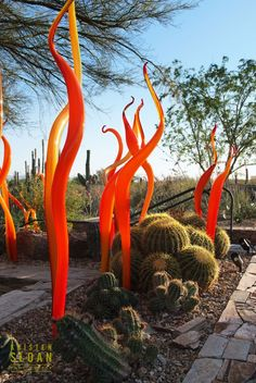 Chihuly for the desert garden....