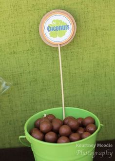 You can't have a Moana birthday party and not 'consider the coconut', so how about adding these chocolates that look a lots like coconuts? See more party ideas and share yours at http://CatchMyParty.com