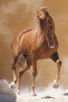 A great photo of #Horses ||| #Caballos