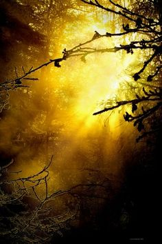 Yellow Rays #woodland #forest #trees ...http://socialmediabar.com/inspired
