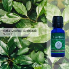 $22, Ravintsara, Essential Oil, 15 ml. bottle