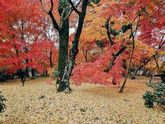 Fall Foliage of Eikando Zenrinji, Kyoto. Kyoto, Travel Photos, Country Roads, Tours, Fall, Autumn, Travel Pictures, Fall Season