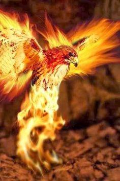 ideas for phoenix bird tattoo firebird shape Phoenix Art, Phoenix Rising, Phoenix Images, Phoenix Wings, Phoenix Dragon, Art Internet, Phoenix Bird Tattoos, Brust Tattoo, Fire Image