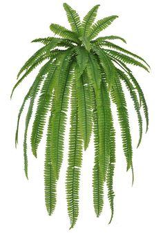 Hops Plant, Fern Plant, Plant Art, Plant Leaves, Style Tropical, Tropical Art, Tropical Plants, Plant Illustration, Botanical Illustration