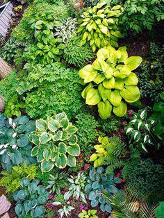 MN shade garden