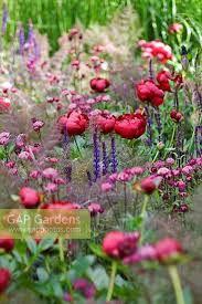 Image result for chelsea flower show laurent perrier garden 2009