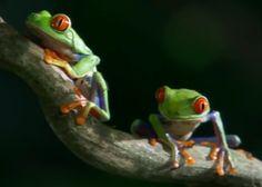 ¿El mejor vídeo de naturaleza que has visto? | La ciencibilidad