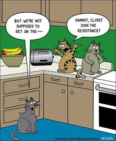 The Bent Pinky by Scott Metzger. January the link to check out great cat products we have for your little feline friend! Funny Cartoons, Funny Cats, Funny Animals, Wild Animals, Baby Animals, Funny Cat Photos, Funny Animal Pictures, Crazy Cat Lady, Crazy Cats