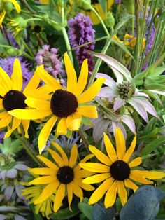 Dotted Mint & Black Eyed Susans- garden worthy wildflowers beloved by pollinators! Learn to grow them in Taming Wildflowers- my new book about wildflowers and DIY wildflower weddings.
