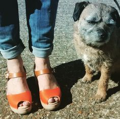 Highwood open tan and orange clogs and Cracker the dog