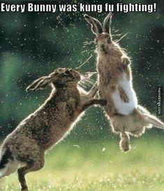 Kung Fu fighting bunnies. http://mbinge.co/1okzXfx