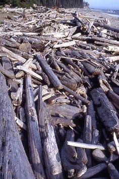Vancouver Island - West Coast Trail - driftwood