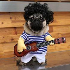 Small Guitar Dog Clothes