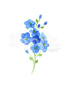 Flowers forget-me royalty-free stock illustration