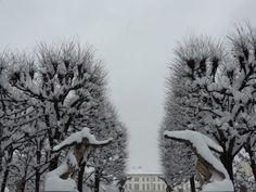 Mirebellgarten in winter