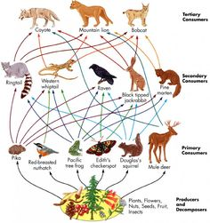 This is a food web. The food web shows the energy flow through different organisms in an ecosystem.