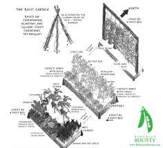 basic companion planting