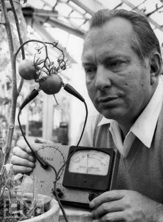 "American science fiction writer and founder of the Church of Scientology L. Ron Hubbard uses his Hubbard Electrometer to determine whether tomatoes experience pain, 1968. His work led him to the conclusion that tomatoes ""scream when sliced."""