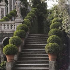 Formal garden using topiary. Formal Gardens, Outdoor Gardens, Landscape Architecture, Landscape Design, House Architecture, Dream Garden, Home And Garden, Garden Villa, Boxwood Garden