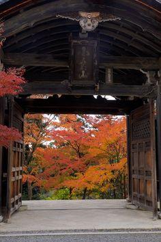 二尊院の紅葉、人が多いかなと思っていましたが、皆さん横一列でのきれいな前進(笑) 紅葉の馬場の美しい光景を、知らない人同士でしたが落ち着いて一緒に撮影で... Japan Landscape, Japanese Maple, Japanese Architecture, Nihon, Great View, Kyoto, Autumn Leaves, Cool Pictures, Temple