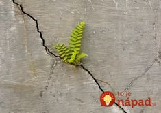 Fixing A Cracked Wall Is A Simple Homemade Project Pot Image, Cracked Wall, Nature's Miracle, Bloom Where Youre Planted, Growing Strong, Urban Nature, Basement Walls, Plant Wall, Ikebana