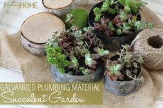 Galvanized Plumbing Material Succulent Garden... beauty from the hardware store!   www.findinghomeonline.com