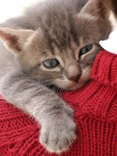Pet Health: Get the answers to the most common cat health questions