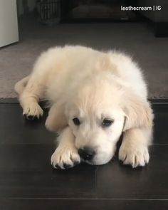 how to make ur pupper smile - rarepuppers White Retriever, Chien Golden Retriever, Cute Puppies, Cute Dogs, Dogs And Puppies, Doggies, Funny Dog Videos, Funny Dogs, Animals And Pets