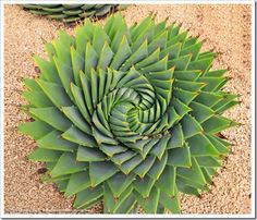 Succulents and More: 2014 Succulent Extravaganza wrap-up, part 1