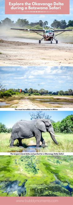 Botswana Okavango Delta Safari and Sanctuary Baines' Camp |Moremi Game Reserve | Impressive wildlife and untainted wilderness | Game Drive | Living with Elephants Foundation | Luxurious Haven in the Lap of Nature |  Africa | Travel | Travel Photography | Bubbly Moments