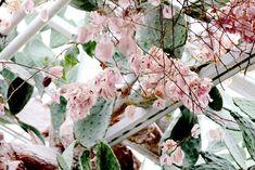 Untitled | by Siniirr Kitty, Fruit, Plants, Summer, Kitten, Summer Time, Kitty Cats, The Fruit, Flora