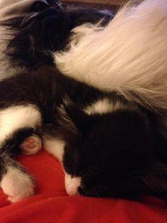 Sylvester and Oreo!