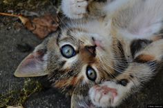 © Blende, Claudia Loch, Hey Du! #Fotowettbewerb #Tierfotografie #Katze