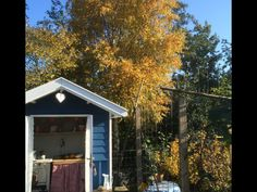 Autumn on our allotment with our DIY shed
