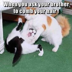 Animals are the best entertainment in the World, which make us laugh anytime, anywhere! Just look ridiculous animal picdump of the day 28 if you love funny animals. So ridiculous, funny and cute 31 funny animal pics! Funny Animal Images, Cute Funny Animals, Funny Animal Pictures, Silly Pictures, Cute Cat Memes, Cute Cat Gif, Cute Cats, Kittens Cutest, Animal Humour