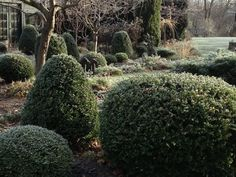 10 Garden Ideas to Steal from Belgium by Michelle Slatalla  cloud pruned boxwood ; Maria Nation ; Gardenista