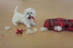 OOAK Realistic Miniature Dog ~ Westie Dog ~ 1:12 dollhouse Handmade furred Pet