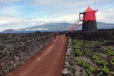 Pico, Açores. Foto de Miguel Madeira  #azores #portugal