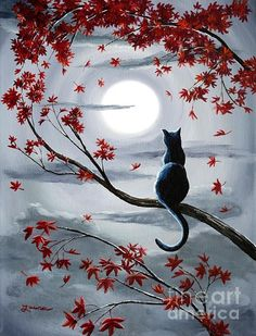 Black cat in a tree watching full moon