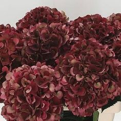 Buy wholesale Red Hydrangea Magical Rubyred Classic for delivery direct to any UK address - wholesaled in Batches of 10 stems. Ideal for flower arrangements & wedding flowers. No minimum order required - Floral accessories also available. Limelight Hydrangea, Hydrangea Colors, Blush Flowers, Christmas Floral Arrangements, Wedding Flower Arrangements, Flower Bouquet Wedding, Red Shrubs, Hand Tied Bouquet, Florist Supplies