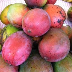 best dating a hawaiian mango recipe